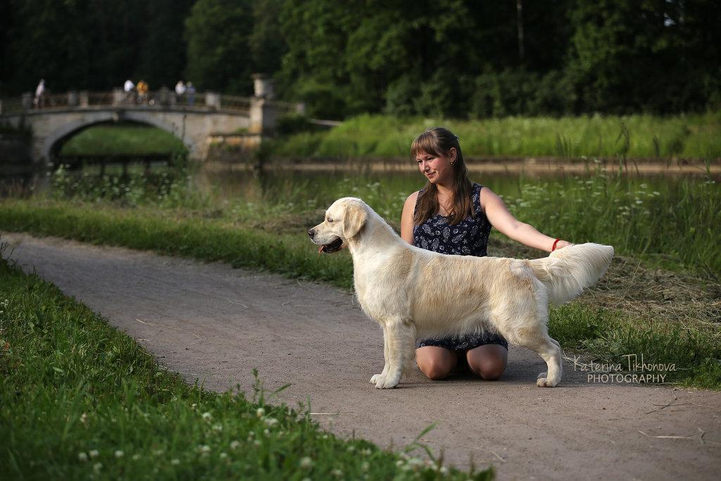 Экстерьерная фотосъемка собак. Фото собаки в стойке.