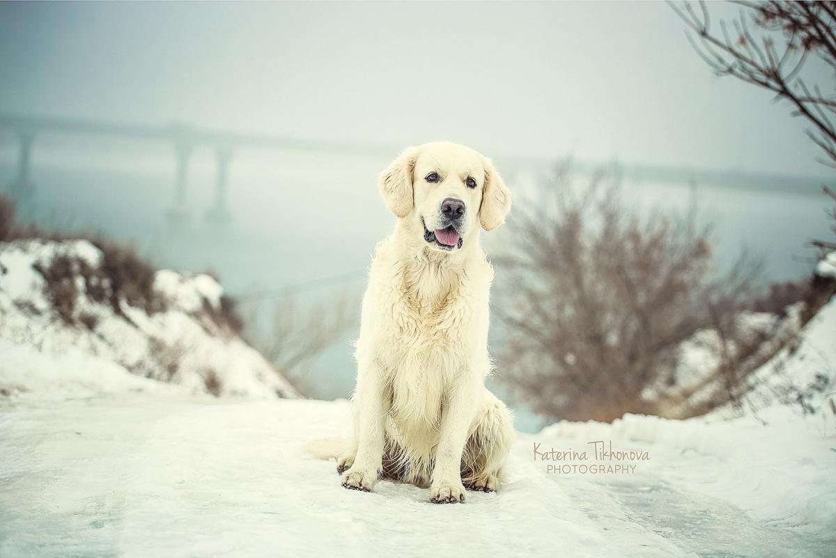 Фотосъемка собак.